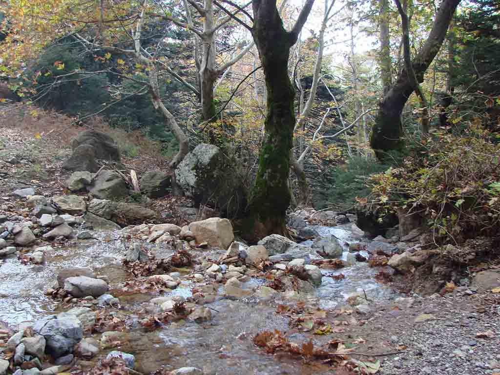 Dirfi_river